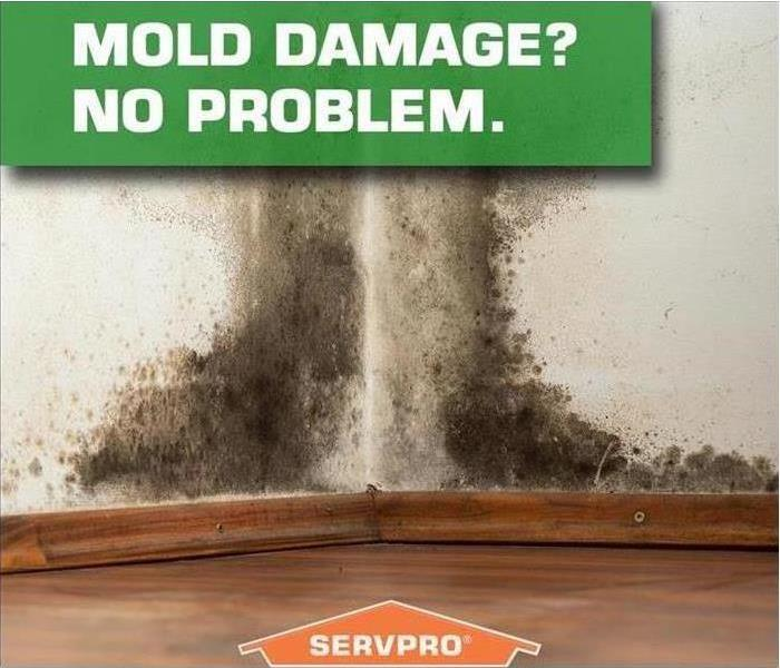 Mold Remediation Do you know how to help prevent mold growth?